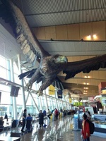 hobbit_wellingtonairport