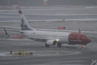 Norwegian_in_snow_1