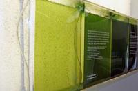 biopolttoaine_valmistus